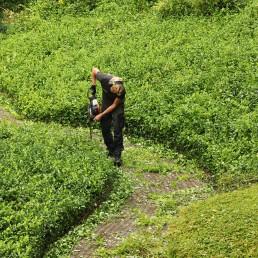 Biesot groenvoorziening tuin woningbouw vve vijfhuizen hoofddorp haarlem heg snoeien