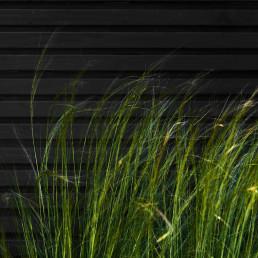 Biesot tuinaanleg tuinstyling vijfhuizen hoofddorp haarlem grassen schuur